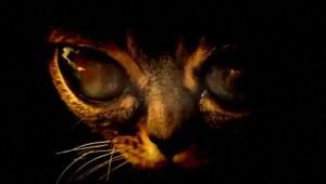Informe sobre ovnis de Australia habla de alienígenas con cara de gato