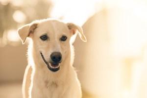 Perro argentino no abandona la tumba de su dueño desde hace tres años