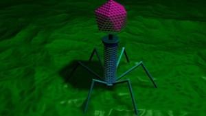 """No todos los virus son villanos: """"Es probable que los humanos estemos hoy aquí por ellos"""""""