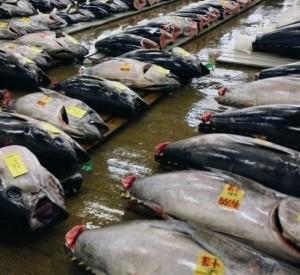 pescado-atun-rojo
