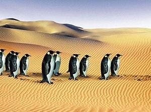pinguinos-cambio-climatica