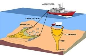 Oceana-pesca-arrastre