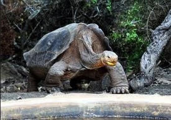 Galapagos-Diego