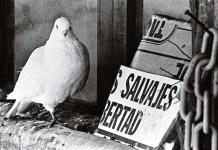"""© Manuel López, """"Mini zoo en Brunete, Madrid, 1976"""". De la exposición antológica """"Manuel López 1966++66-2006"""""""