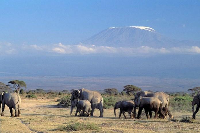 Banco Mundial/Curt Carnemark: Elefantes en Kenia cerca del monte Kilimanjaro.