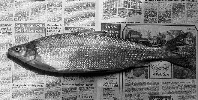 Mapplethorpe pez 1985
