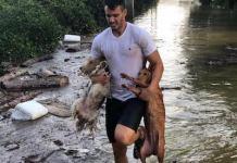salvando animales perros