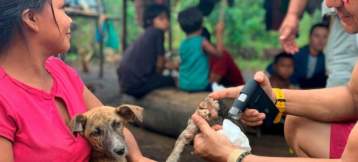 Isabelle Roger/PAHO/WHO En hasta el 99% de los casos humanos, el virus de la rabia es transmitido por perros domésticos
