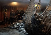 ODI pesquero chino