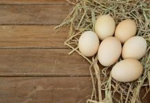 granjas avicolas