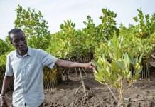 UNEP las plagas atacan sistemas degradados