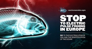 La Defensora del Pueblo Europeo investigarásubvenciones ilegales a la pesca eléctrica