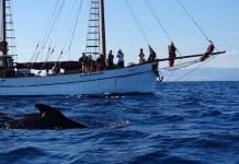 CIRCE en la campaña de marcar calderones en el Mediterráneo