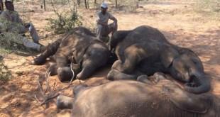 Elefantes Sin Fronteras denuncia la muerte de 87 elefantes en Botswana