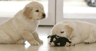 Perros guía: Las donaciones a la Fundación ONCE tendrán beneficios fiscales