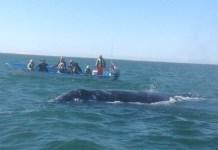 Kontxaki-ballenas-barcas