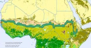 En África se plantan árboles para construir una gran muralla verde que frene la desertificación del Sáhara