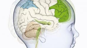 Un estudio explica cómo se reorganiza el cerebro de los niños ciegos
