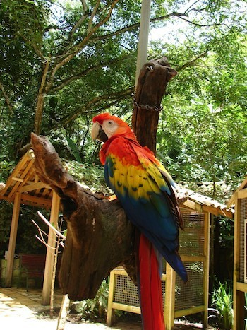 Adriana Bianco:. Macaw Mountain Bird Park &Nature Reserve