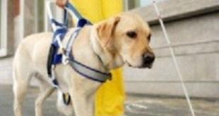 Uber no admite personas con perro guía