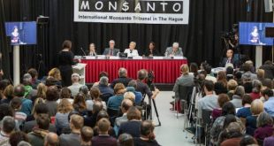 Tribunal Internacional Monsanto: la multinacional es culpable de ecocidio