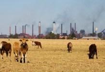 Vacas pastando ante una industria que contamina por CO2