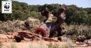 WWF-Retortillo-encina-uranio