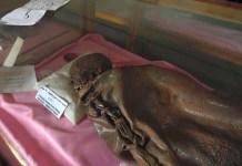 Momias en el museo arqueológico de Sanaa