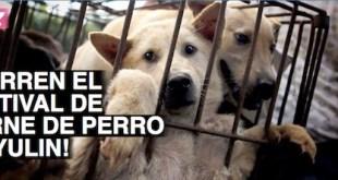 Banner de Avaaz para erradicar la práctica de la muerte de perros en el Festival de Yulin, en China