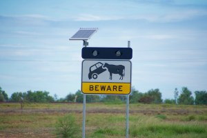 Australia, where the cows tip the cars.
