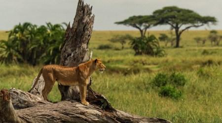 12 day safari vacation TANZANIA Great Migration Crossing, Wildlife & Cultural Immersion (3)