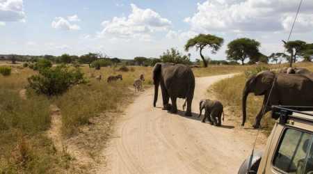 Wildlife & Cultural Immersion Safari book your dream trip (4)