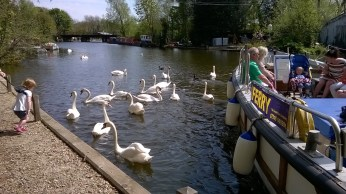 Swans and Ferry