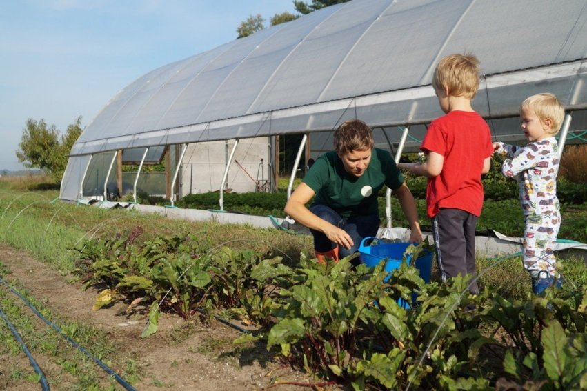 Beet Harvest with boys (resized)