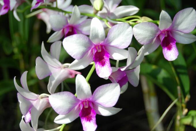 Orchids Wedding Flowers Perla Farms Nationwide Flowers