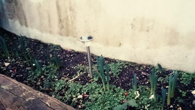 Dann habe ich im Garten entdeckt, dass meine Blumenzwiebeln schon sprießen. Das wird wieder schön bunt im Frühling.