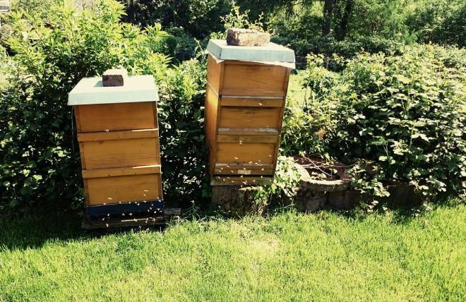 Dem Nachbarn ist ein Bienenvolk entwischt, welches mein bruder und ich im Auge behielten, bis der Nachbar kam um es zurück zu holen.