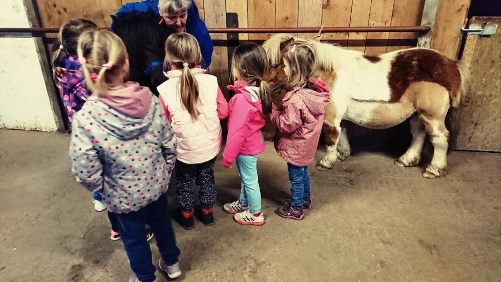 Kindergeburtstag Ponyhof Pferde putzen