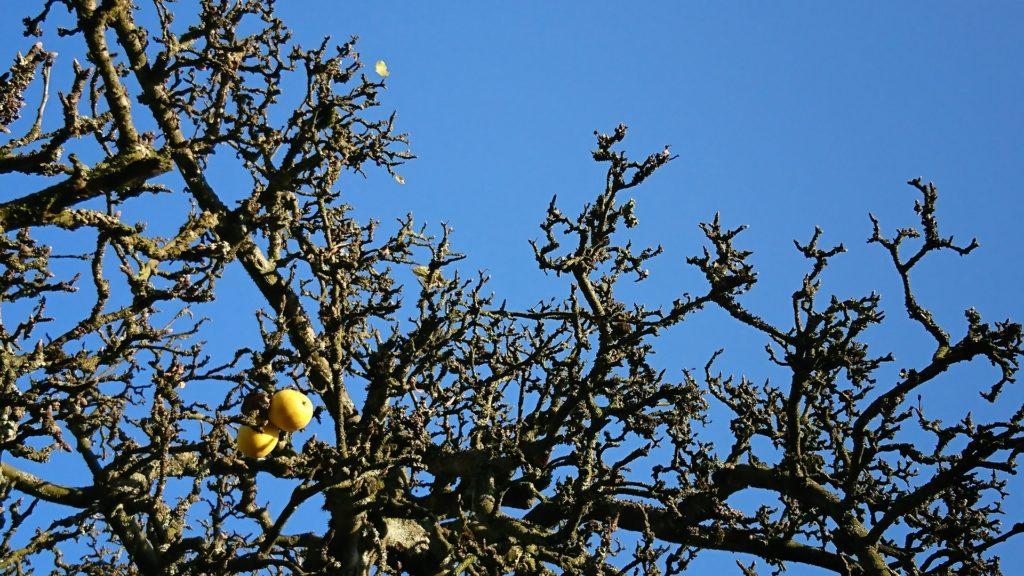 Perlenmama Herbstbild blauer Himmel Apfelbaum