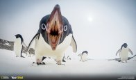 This is what happens when you leave a gopro out on the sea ice The Photo was taken near Casey Station Antarctica, It was one of a series of captures by a gopro on time lapse that was set out on the ice near the site where we are running an ocean acidification experiment. We often get groups of Adelie Penguins coming to see what we are doing and this one was trying to peck the camera. I am currantly based in Antartica for the next eight months through the winter and would be happy to help with any photo's requests required for up coming publications.