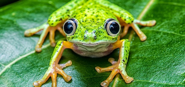 Żabki są super!