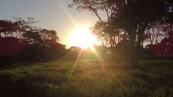 Wschód Słońca na łące :)