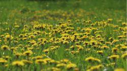 Łąkowe królestwo pszczół :)