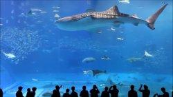 Morskie potwory nad naszymi głowami!