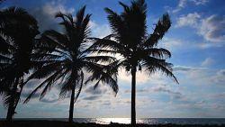 Nad brzegiem Oceanu Indyjskiego w cieniu palm :)