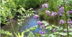 Odpoczywamy przy strumyku koło fajnych kwiatuszków:)