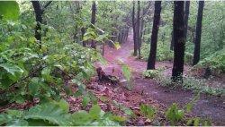 Leśna droga moknie!