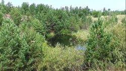 Oczko wodne w lesie