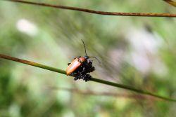 Nasze owady codzienne