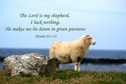 The Lord is my shepherd, I lack nothing